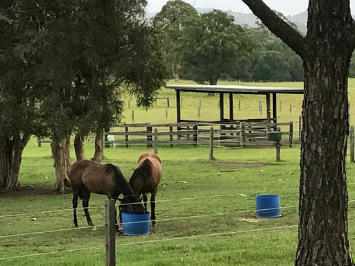 jtrm farm horses