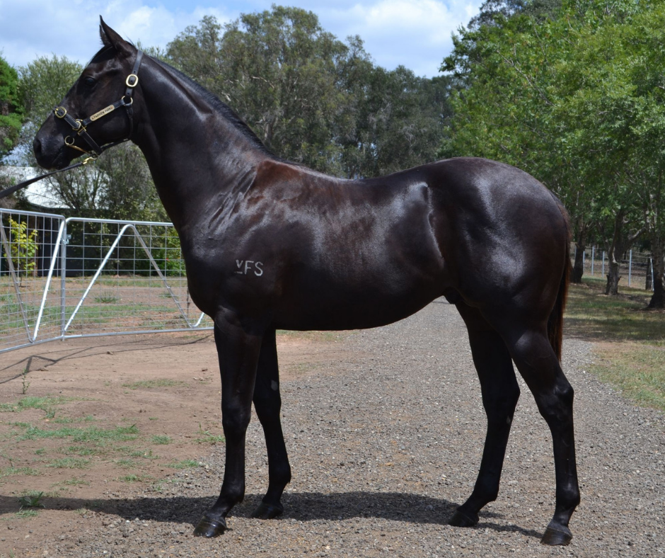 Lot 593, a colt by Disssident ex Prettyfamous