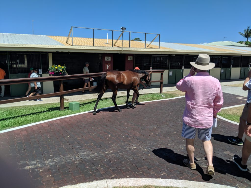 magic millions inspections 2019